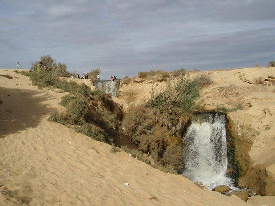 صور من مدينة الفيوم Al-fayoum-oasis