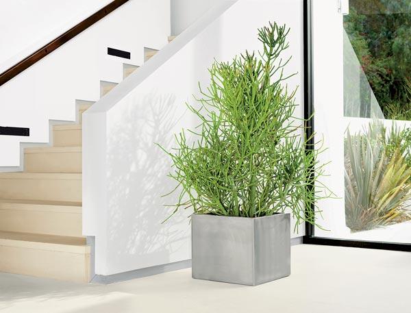 Khám phá những mẫu cây cảnh đẹp hiện đại H20110101-Modern-Houseplants-main