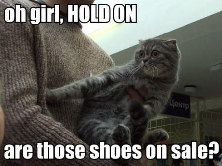 CAT-tastrophes! Ghh