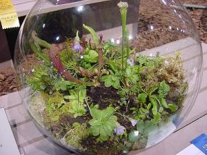 bac vegetal Terrarium-carnivores
