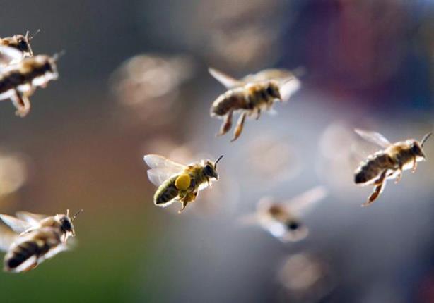 من هو الصحابي الذي حمى الله جسده بجيش من النحل؟ 2017_1_15_12_38_56_968