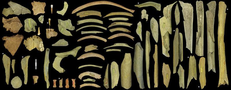 Neanderthal Dinner: Reindeer With A Side Of Cannibalism Figure-2-goyet-rbins_custom-79b836d64bb36099394737e9f71a82b94902950d-s800-c85