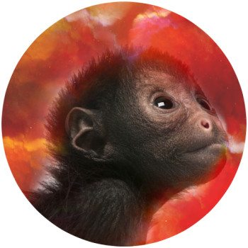 Here's One For Martha To Put A Spin On.  Red-monkey