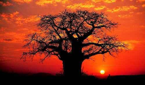 Chien de temps ! Nai-pas-rencontre-baobab-sabine-sicaud-L-1