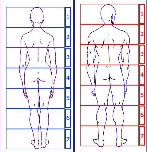 entraînement bustes [noony4] Dessiner-peindre-corps-humain-proportions-par-L-2