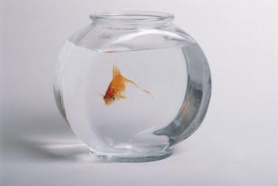 La théorie du genre : Une vaste opération d'intox Calvaire-poissons-rouges-priorite-sociale-lum-L-7nKis3