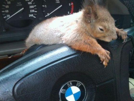 Masik l'écureuil Soldat-sauve-ecureuil-quitter-L-ILZLsG