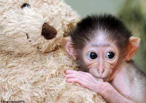 Grands singes, petits singes Bebe-singe-maman-peluche-L-1