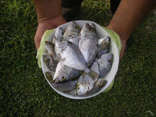 Риболов на островите Тасос и Самотраки - 1 - Page 4 014754593