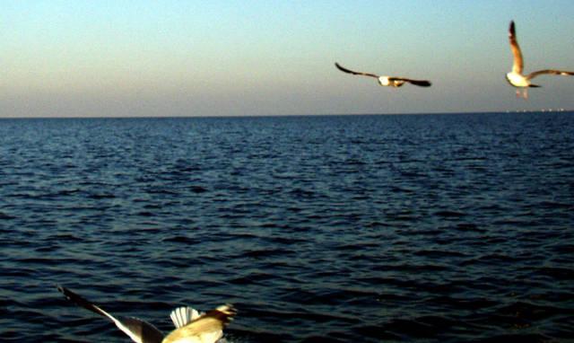 С лодка в Морето 2011 г. - 1 част 021925880