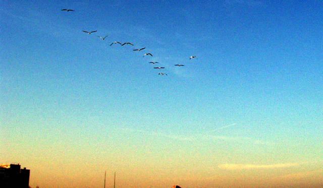 С лодка в Морето 2011 г. - 1 част 021925882