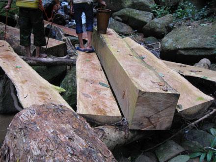 """Dân thảnh thơi đốn cây xẻ gỗ, kiểm lâm """"không nỡ bắt"""" 2_7_1289638278_04_IMG_2468"""