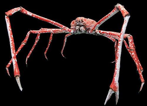 un animal - Blucat - 9 octobre trouvé par Martine Crabe-araignee