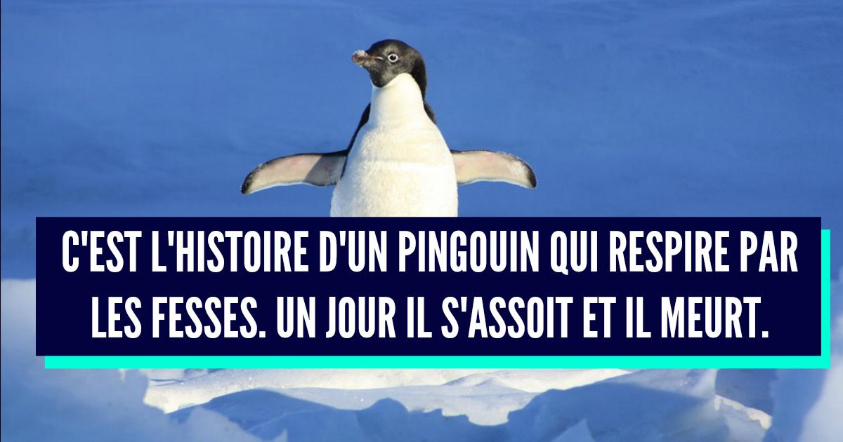 Mort de rire — parce que j'ai le sens de l'humour ! - Page 39 Pingouin