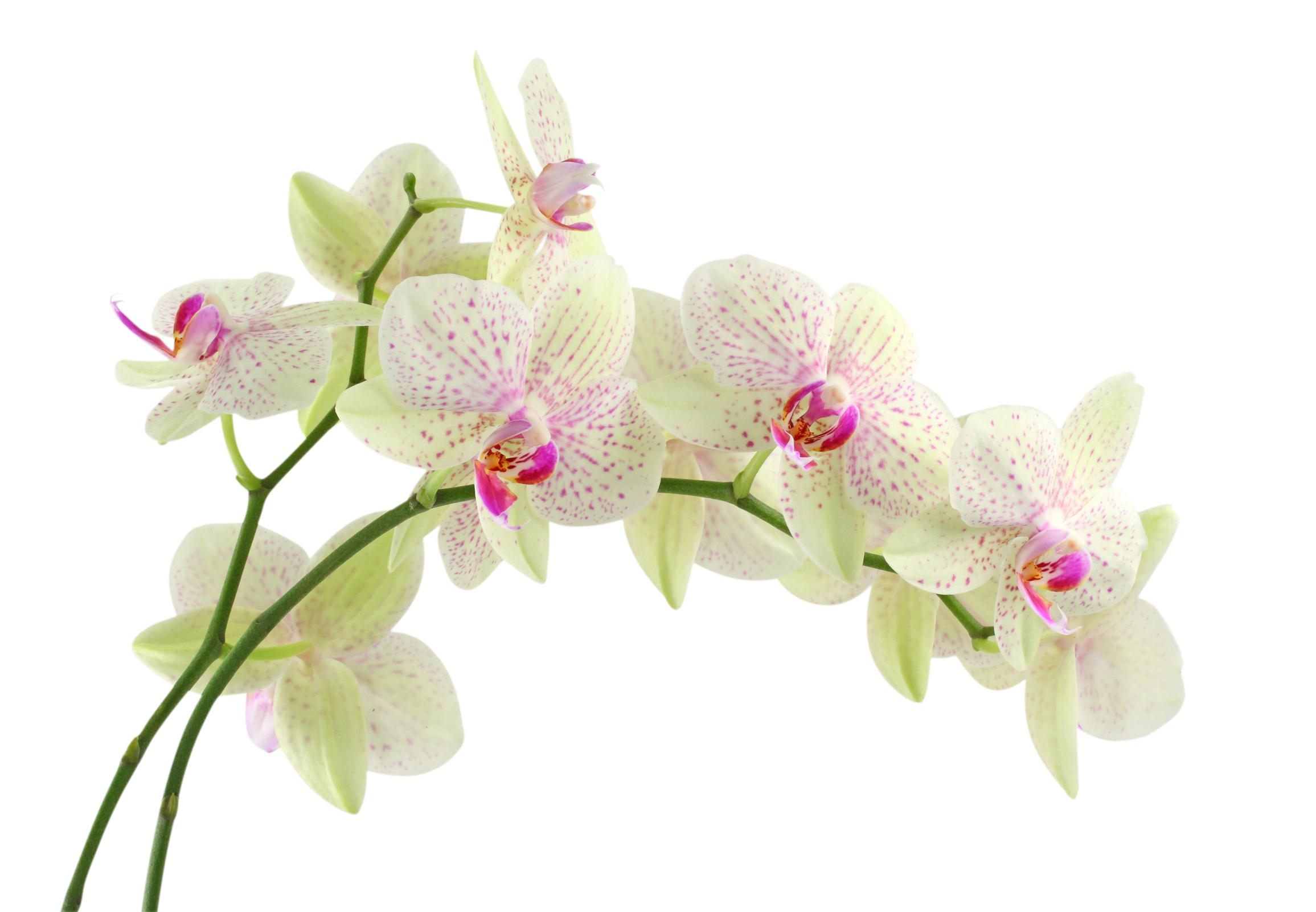 Présentation Orchidee-84380