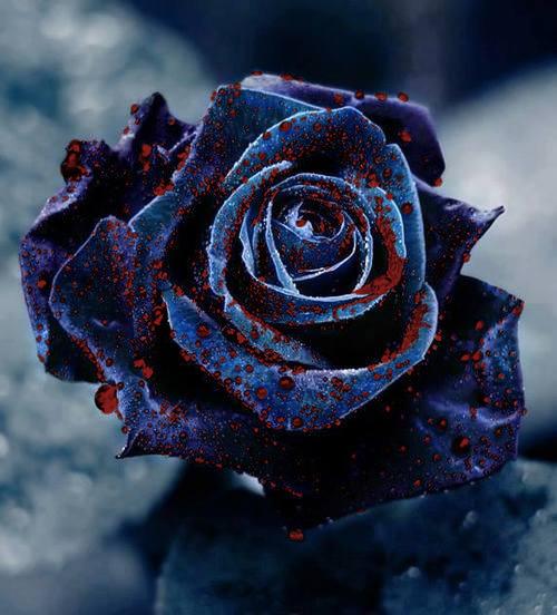 Rosa sangrante Tumblr_inline_ncfbx36BWA1si8p7j