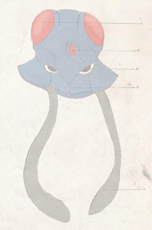 Dr. Mortimer Phene - In search of legendary pokemon Kyogre Tumblr_inline_nfwb6ukQfB1siplpa