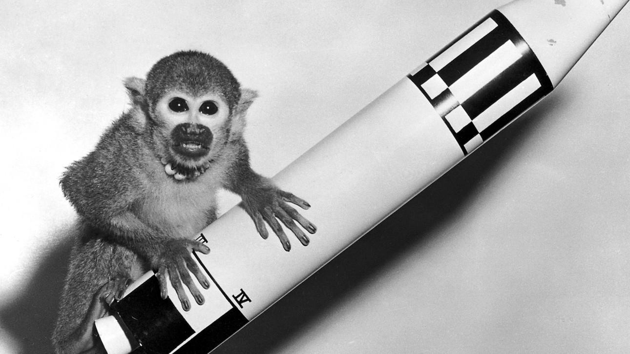 Glasgow and Edinburgh: Ongoing Banter Thread XII - Twelve Monkeys BHO-Astronauts-Animals-in-space-00012087782635