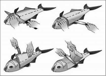 Conservación de las Capturas en Pesca Fg0-7645-5028-4_1902