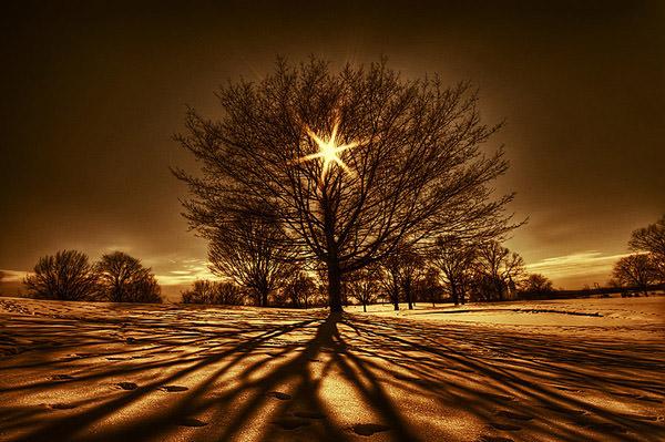 FOTO TË MUAJIT DHJETOR Tree_Of_Light_by_lowapproach