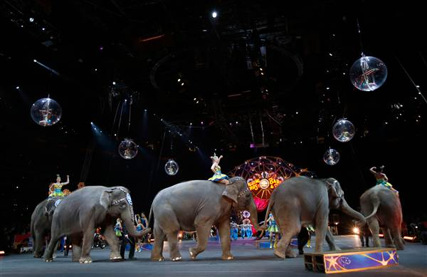 Ringling Bros. to Retire All Circus Elephants in May — 2 Years Early 150706-circus-animals-jpo-338a_53468ad4592c2beeb9cd61d7e2d8c84e.nbcnews-ux-600-480
