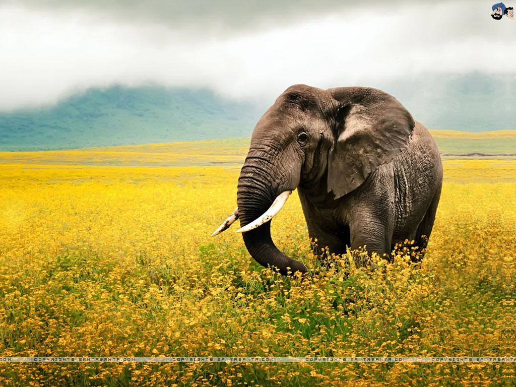 Slonovi - Page 2 Elephants-0v