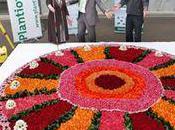 Cadeau à Tails ! [jusqu'au 16 Octobre] Record-monde-gateau-floral-L-tDcvYm-175x130