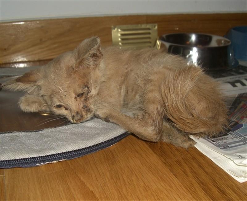 Νέο γατάκι B_235650
