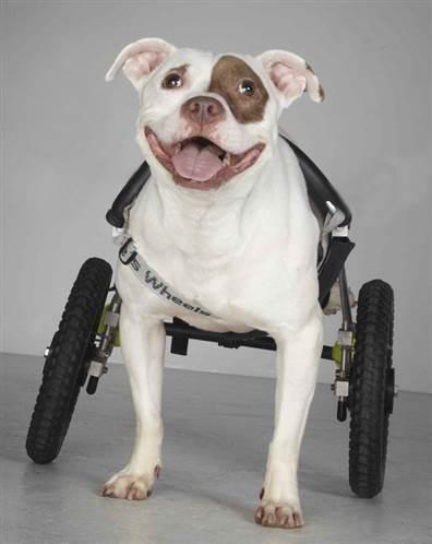 Animaux handicapés Chili%20OHAR001Apri2010%20%282%29.grid-5x2