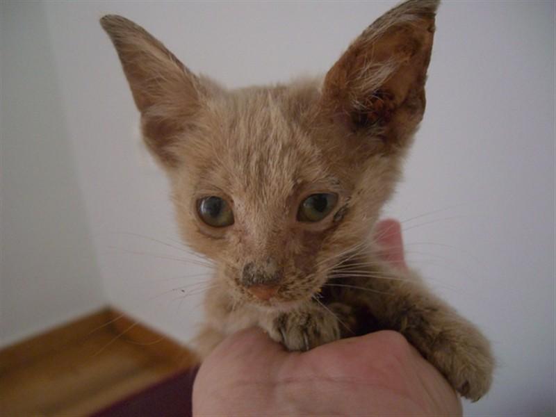 Νέο γατάκι B_190231