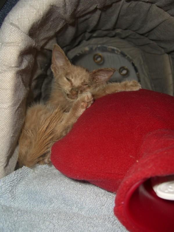 Νέο γατάκι - Σελίδα 2 B_012916