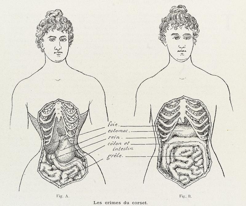 Resistencia Bacteriana de nueva generación. - Página 6 Human_body_cutaway_19th_century