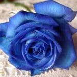 Ваш любимый цвет и ваша сексуальность.. 150_150_2_d5defd74e81e3442efde