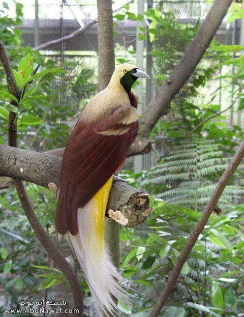 صـور اجمل انواع الطـيور ( عالم الطيور)  M051
