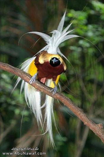 صـور اجمل انواع الطـيور ( عالم الطيور)  M053