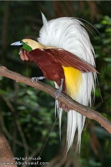 صـور اجمل انواع الطـيور ( عالم الطيور)  M055
