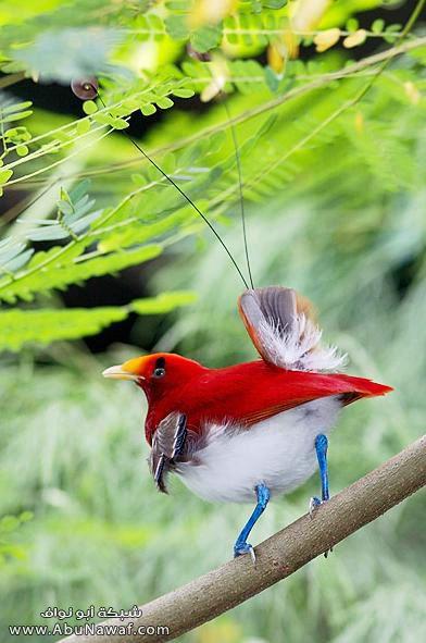 صـور اجمل انواع الطـيور ( عالم الطيور)  M056