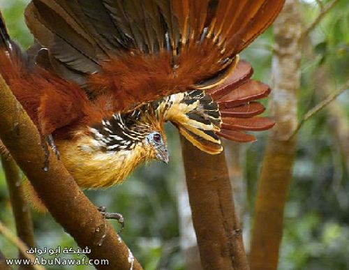 صـور اجمل انواع الطـيور ( عالم الطيور)  M059