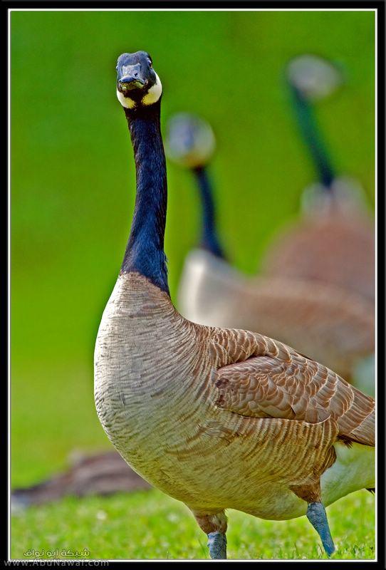 صور حيوانات ان شاء اللع تنال اعجابكم 469