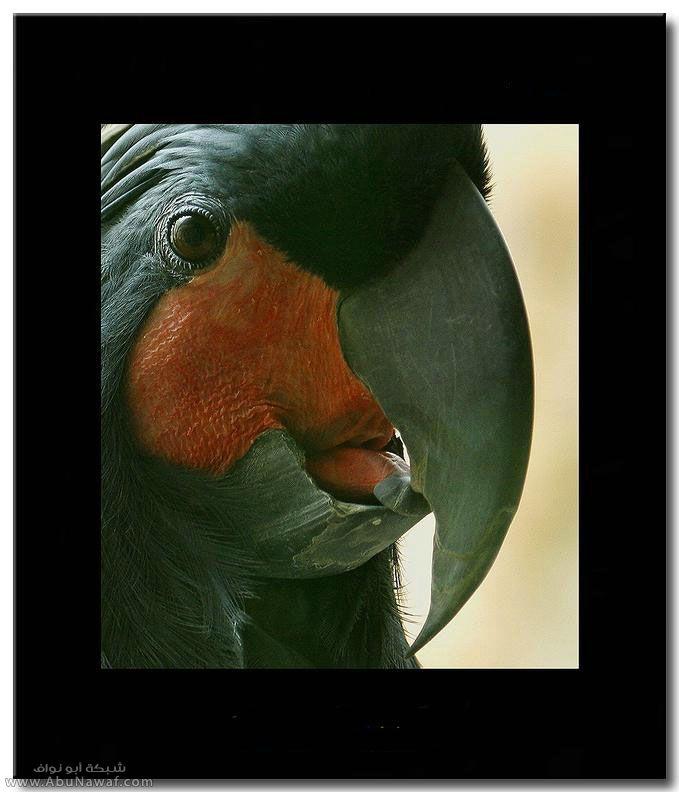 صور حيوانات ان شاء اللع تنال اعجابكم 481