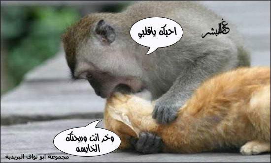 صورة وتعليق ادخلو شوفوا 1-
