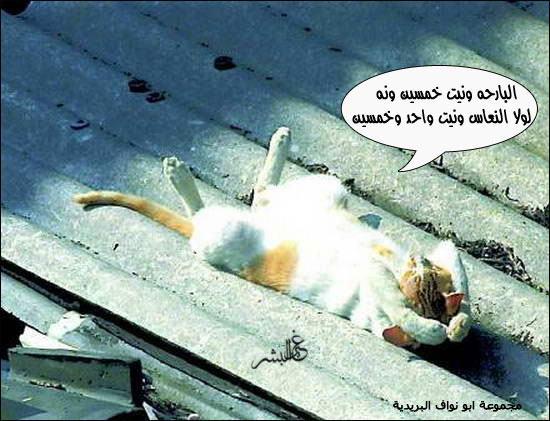 صورة وتعليق ادخلو شوفوا 8-