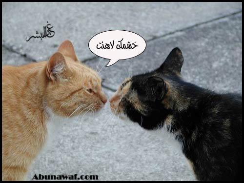 معلومات عامة عن القطط 4