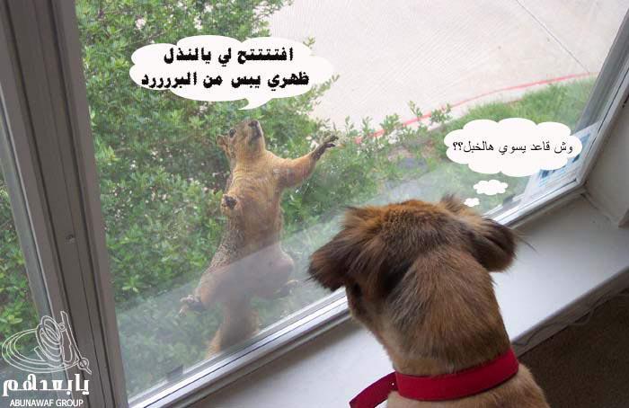 هههههههههه تعليقات مضحكه  Reo_5