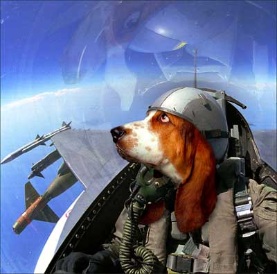 DogFighter? Dogfighter
