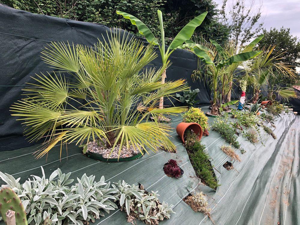 évolution de ma butte palmiers, IMG_1482