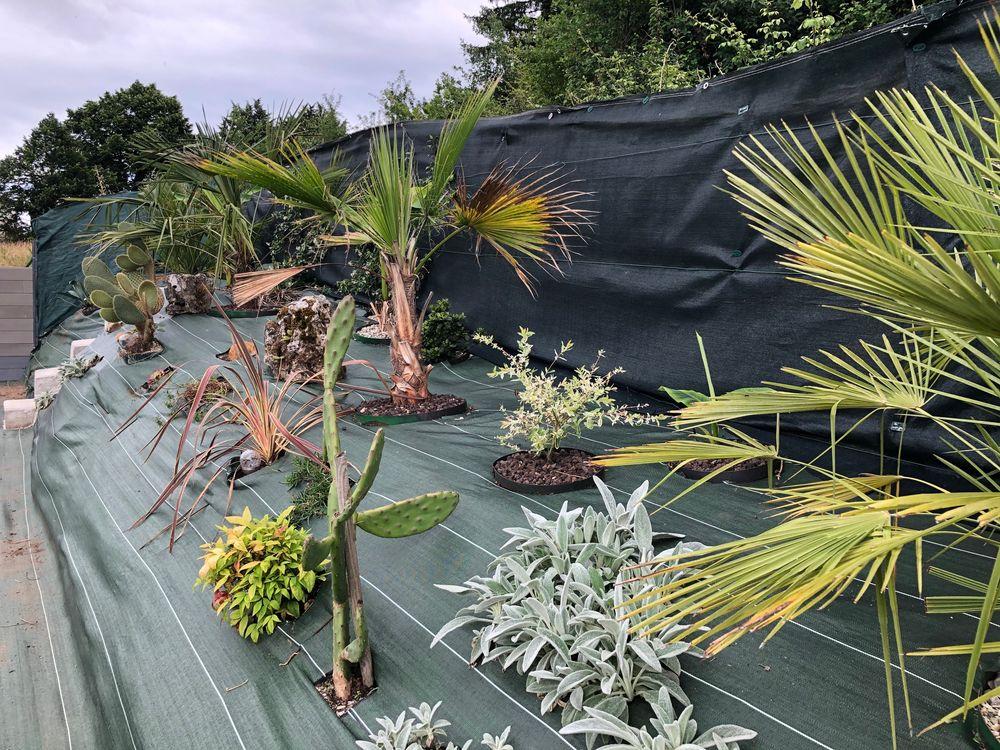 évolution de ma butte palmiers, IMG_1483