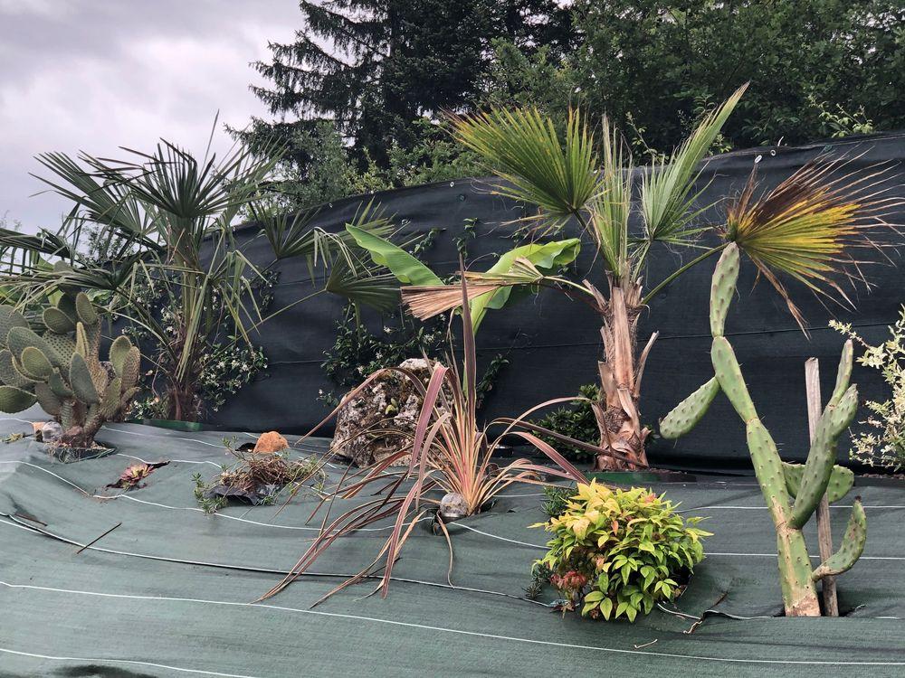 évolution de ma butte palmiers, IMG_1484