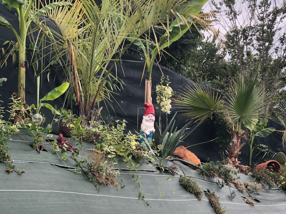 évolution de ma butte palmiers, IMG_1485