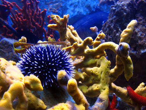 More i podmorski svijet Jezinac-210408